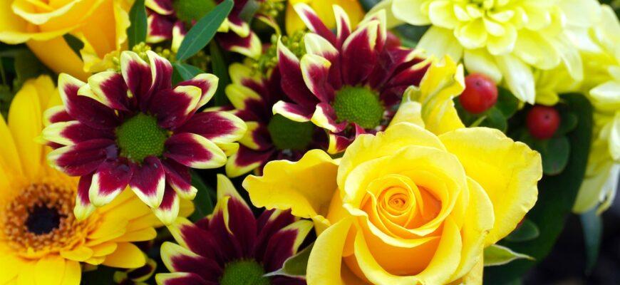 Flowers Blossom Bloom Nature Flora  - matthiasboeckel / Pixabay
